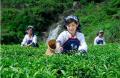 远丰集团携手茶仙子共建茶行业电商平台